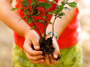 Plant-a-tree1